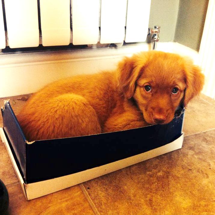Shoe Box Kid
